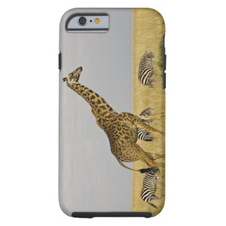 Maasai Giraffes roaming across the Maasai Mara 3 Tough iPhone 6 Case