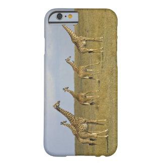 Maasai Giraffes roaming across the Maasai Mara Barely There iPhone 6 Case