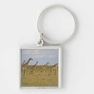 Maasai Giraffes roaming across the Maasai Mara Keychain