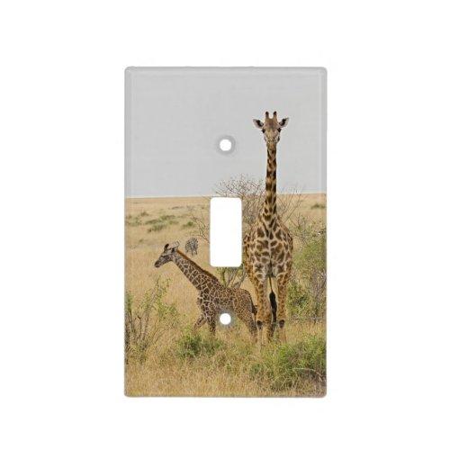 Maasai Giraffes roaming across the Maasai Mara Light Switch Cover