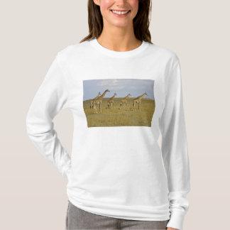 Maasai Giraffes roaming across the Maasai Mara T-Shirt