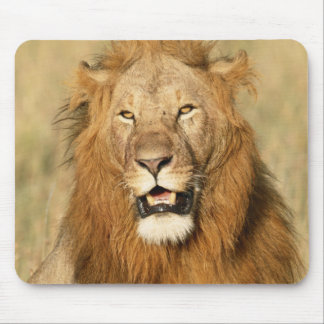 Maasai Mara National Reserve, Male Lion Mouse Pad