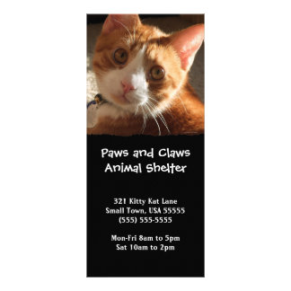 Mac Cat Photo Animal Adoption Bookmark Rack Cards