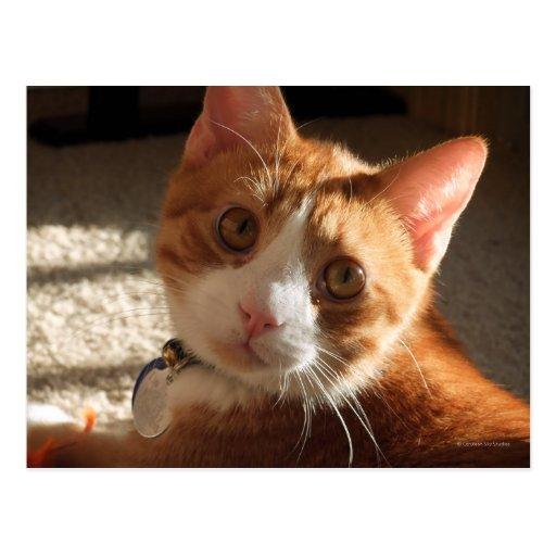 Mac Cat Photo Postcard