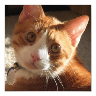 Mac Cat Photo Square Invitation