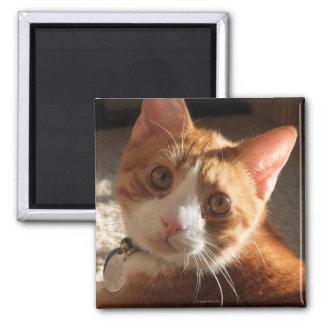 Mac Cat Photo Square Magnet
