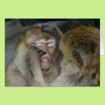 Macaca sylvanus card