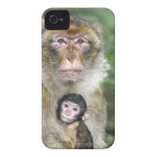 Macaque de Barbary. Adulte con babyMacaca iPhone 4 Case-Mate Cobertura