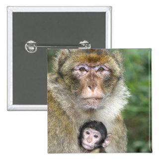 Macaque de Barbary. Adulte con babyMacaca Pin Cuadrada 5 Cm