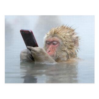Macaque japonés con un teléfono móvil postal