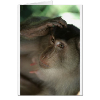 Macaque Monkey Borneo Greeting Card