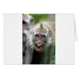 Macaque monkey card
