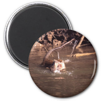 Macaque Monkey in Borneo 2 Inch Round Magnet