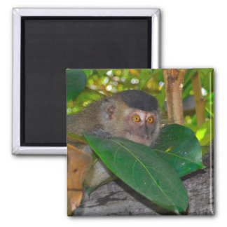Macaque Monkey in Borneo 2 Inch Square Magnet
