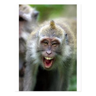 Macaque monkey postcard