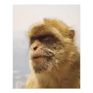 Macaques de Barbary en cara del mono de Gibraltar Arte Fotográfico
