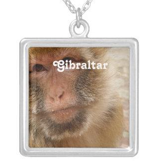 Macaques de Gibraltar Barbary Colgante Cuadrado