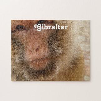 Macaques de Gibraltar Barbary Puzzles Con Fotos