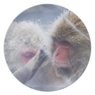 Macaques japoneses (fuscata del Macaca) que Platos De Comidas