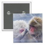 Macaques japoneses (fuscata del Macaca) que prepar Pin Cuadrada 5 Cm