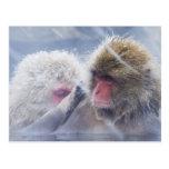Macaques japoneses (fuscata del Macaca) que Tarjetas Postales