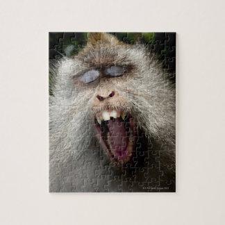 macaques Largo-atados (fascicularis del Macaca) Puzzle