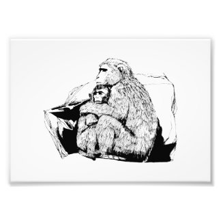 Macaques Photograph