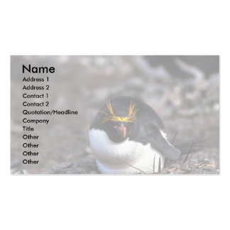 Macaroni Penguin Sitting On Egg Double-Sided Standard Business Cards (Pack Of 100)