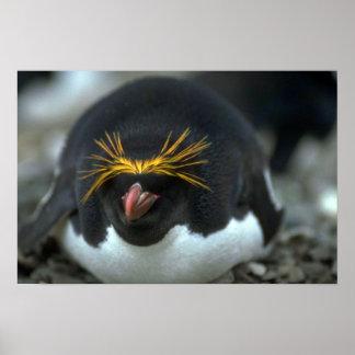Macaroni Penguin Sitting On Egg Poster