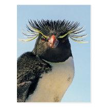 Macaroni penguins postcard