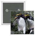 Macaroni Penguins, South Georgia 2 Inch Square Button