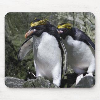 Macaroni Penguins, South Georgia Mouse Pad