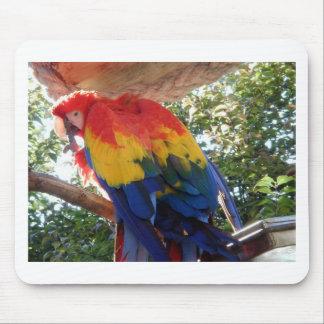 macaw #1 del escarlata tapete de ratones
