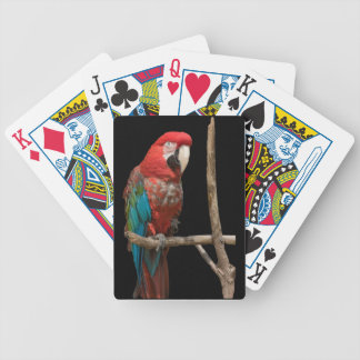 Macaw 52 Deck Playing Cards