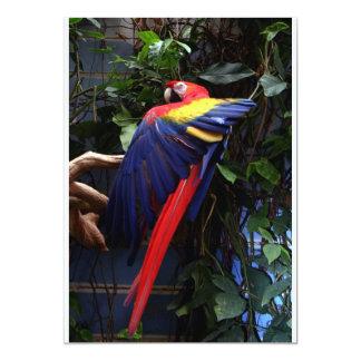 Macaw 5x7 Paper Invitation Card