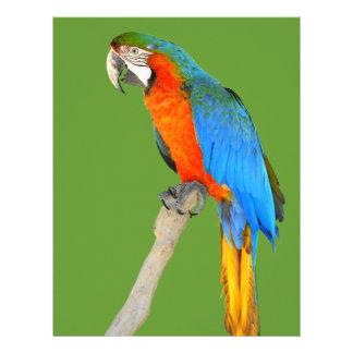 Macaw aislado del escarlata membretes personalizados