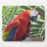 Macaw Alfombrillas De Raton