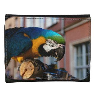 Macaw amarillo y azul animal del pájaro del loro
