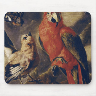 Macaw and Bullfinch Mouse Pad