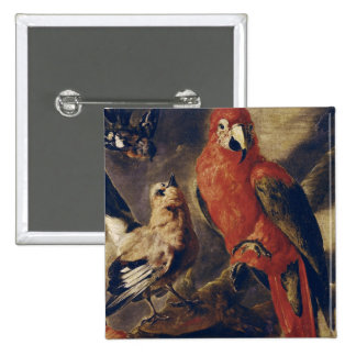Macaw and Bullfinch Pinback Button
