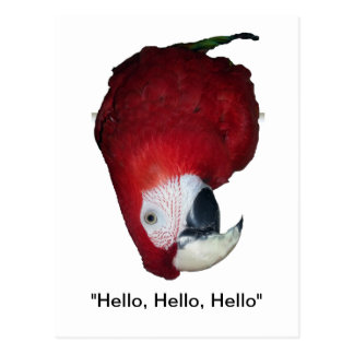 Macaw Antics Postcard