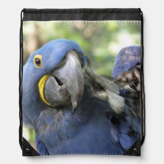 Macaw azul del jacinto mochilas