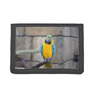 macaw azul del oro en loro de la vista delantera d