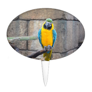 macaw azul del oro en loro de la vista delantera d figuras para tartas