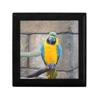 macaw azul del oro en loro de la vista delantera d cajas de joyas