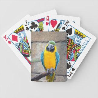 macaw azul del oro en loro de la vista delantera d baraja de cartas