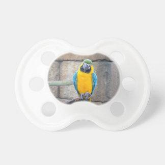 macaw azul del oro en loro de la vista delantera d chupetes