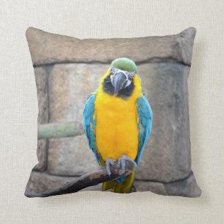 macaw azul del oro en loro de la vista delantera d almohada