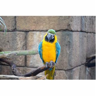 macaw azul del oro en loro de la vista delantera d escultura fotográfica