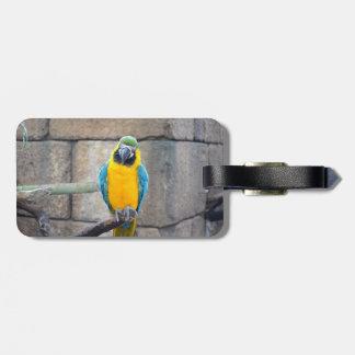 macaw azul del oro en loro de la vista delantera d etiquetas para maletas